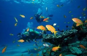 צלילה באילת במועדון אקווה ספורט